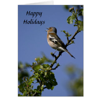 Male Chaffinch singing Happy Holiday Card
