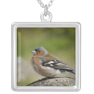 Male Chaffinch (WILD: Fringilla coelebs) Silver Plated Necklace