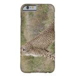 male Cheetah, Acinonyx jubatus, Serengeti, Barely There iPhone 6 Case