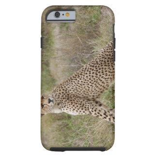 male Cheetah, Acinonyx jubatus, Serengeti, Tough iPhone 6 Case