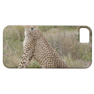 male Cheetah, Acinonyx jubatus, Serengeti, iPhone 5 Cover