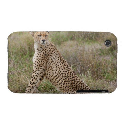 male Cheetah, Acinonyx jubatus, Serengeti, iPhone 3 Case-Mate Cases
