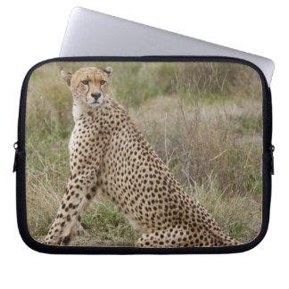 male Cheetah, Acinonyx jubatus, Serengeti, Laptop Sleeve