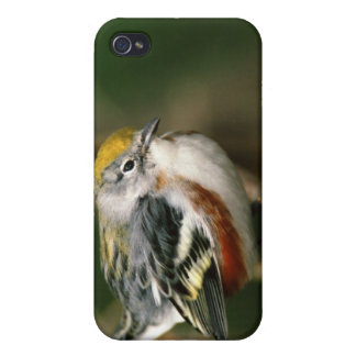 Male Chestnut-sided Warbler, Dendroica iPhone 4/4S Cases
