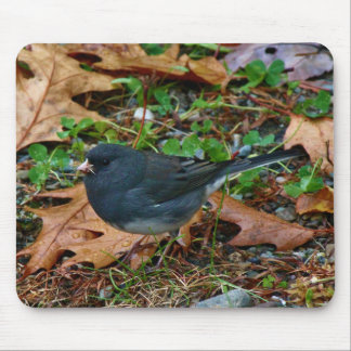 Male Dark-Eyed Junco Mouse Pad