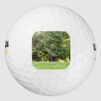 Male dear out of the wood golf balls