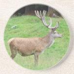 male deer beverage coaster