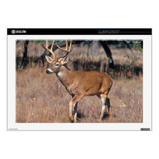 Male Deer Buck With Antlers Decal For Laptop