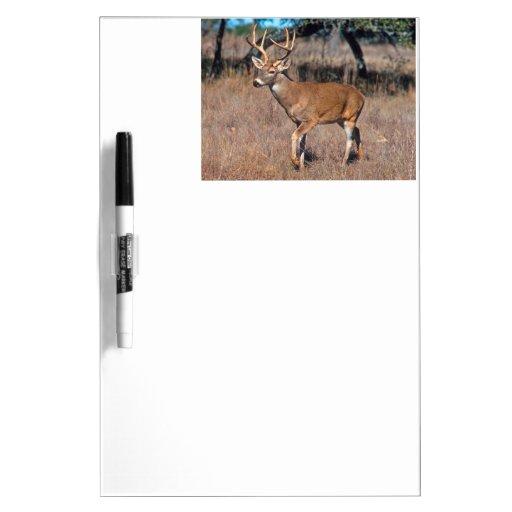 Male Deer Buck With Antlers Dry-Erase Boards