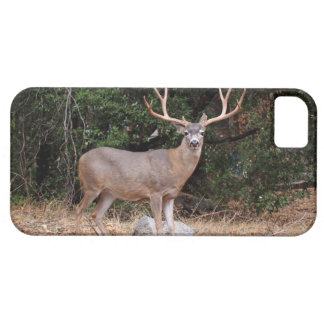 Male Deer in Yosemite iPhone 5 iPhone SE/5/5s Case