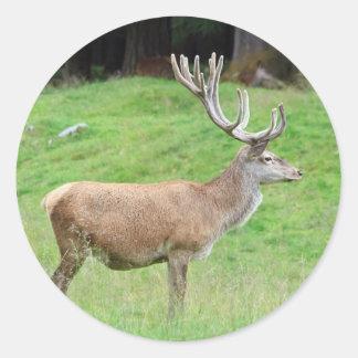 male deer round sticker