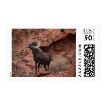 Male Desert Bighorn Sheep - III Postage