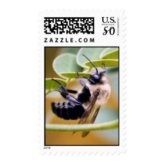 Male Digger Bee Postage Stamp
