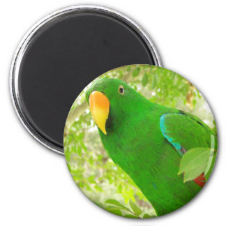 Male Eclectus Parrot 2 Inch Round Magnet