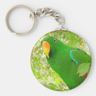 Male Eclectus Parrot Keychain