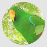 Male Eclectus Parrot Round Stickers