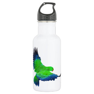 Male Eclectus Stainless Steel Water Bottle