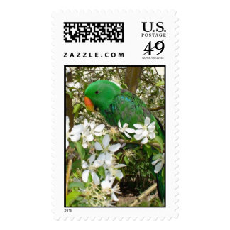 Male Eclectus Stamp