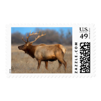 Male elk profile in autumn postage