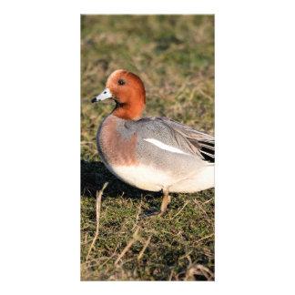 Male Eurasian Wigeon Duck walks in a grassy field Card