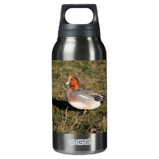 Male Eurasian Wigeon Duck walks in a grassy field Insulated Water Bottle