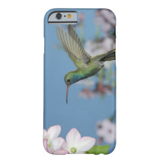 Male feeding on Nicotiana (Nicotiana ssp.), Barely There iPhone 6 Case