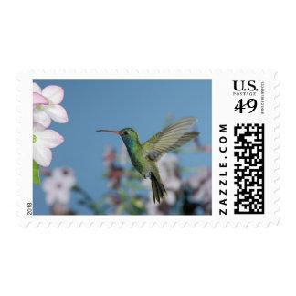 Male feeding on Nicotiana (Nicotiana ssp.), Postage Stamp