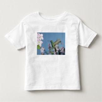 Male feeding on Nicotiana (Nicotiana ssp.), Toddler T-shirt