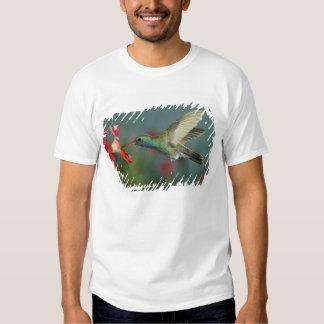 male feeding on Petunia, Madera Canyon, Arizona, T-shirt
