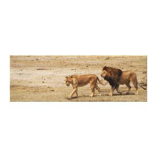 Male & Female Lion Canvas Print