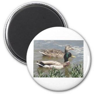 Male & Female Mallard 2 Inch Round Magnet
