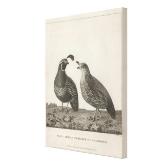 Male & Female Partridge of California Canvas Print