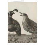 Male & Female Partridge of California Greeting Cards