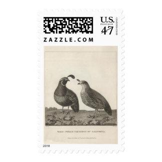 Male & Female Partridge of California Postage