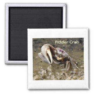 Male Fiddler Crab 2 Inch Square Magnet