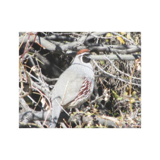 Male Gambel's Quail Canvas Print