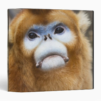 Male Golden Monkey Pygathrix roxellana 3 Ring Binder