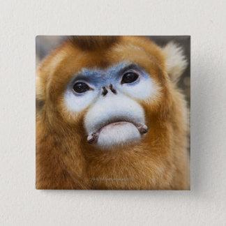 Male Golden Monkey Pygathrix roxellana Button