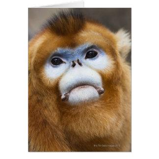 Male Golden Monkey Pygathrix roxellana, portrait Card