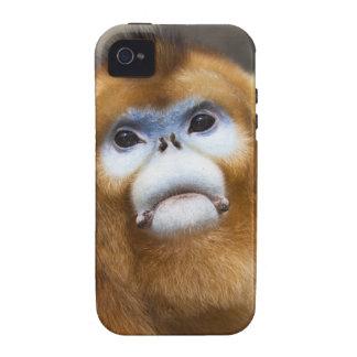 Male Golden Monkey Pygathrix roxellana, portrait Case-Mate iPhone 4 Covers