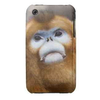 Male Golden Monkey Pygathrix roxellana, portrait iPhone 3 Case-Mate Cases