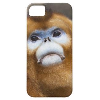 Male Golden Monkey Pygathrix roxellana, portrait iPhone 5 Cases