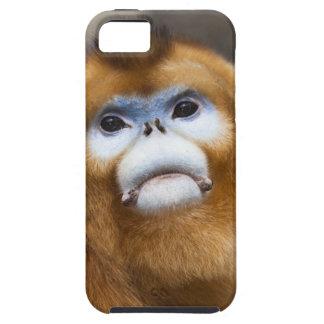 Male Golden Monkey Pygathrix roxellana, portrait iPhone SE/5/5s Case
