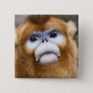 Male Golden Monkey Pygathrix roxellana, portrait Pinback Button