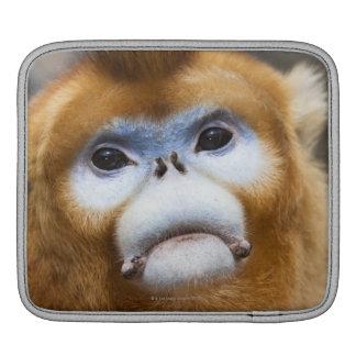 Male Golden Monkey Pygathrix roxellana Sleeves For iPads