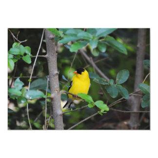 Male Goldfinch 1 Card