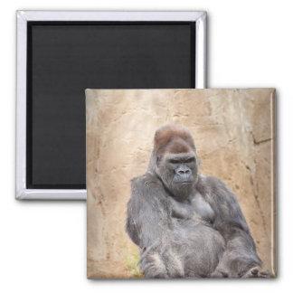 Male Gorilla Magnet