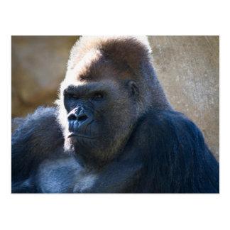 Male Gorilla Postcard