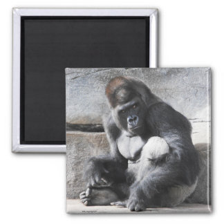 Male Gorilla Watching A Spat Refrigerator Magnet