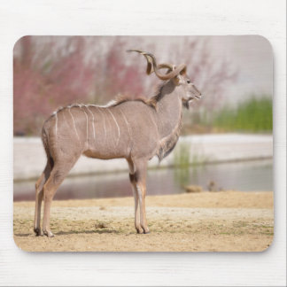 Male greater kudu mouse pad